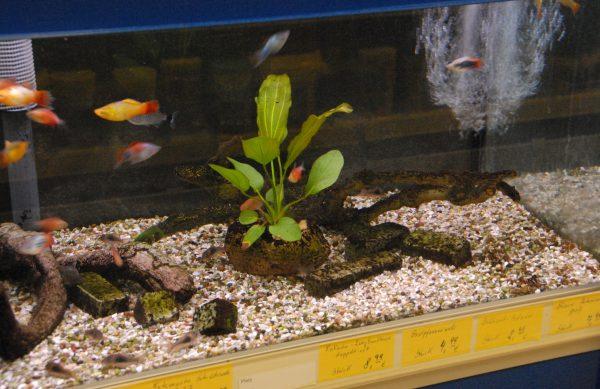 Wir haben für Sie Aquarien in unterschiedlichen Formen und Größen, sämtliche Technik für ein funktionierendes Wasserleben, Futter und Zubehör.