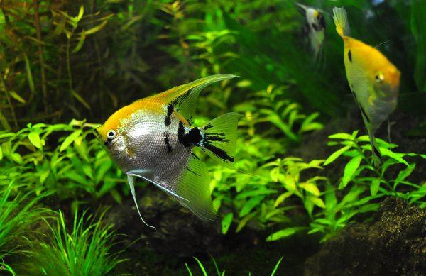 Wir haben für Sie Aquarien in unterschiedlichen Formen und Größen, sämtliche Technik für ein funktionierendes Wasserleben, Futter und Zubehör