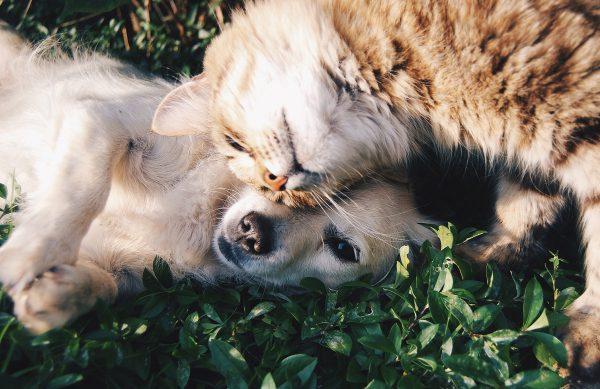 Ausgewogene Nahrung für Hund und Katze bei Rosemeyer Zoo und Garten
