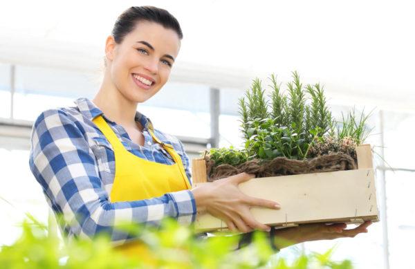 Unser Kräuter & Gemüse Sortiment