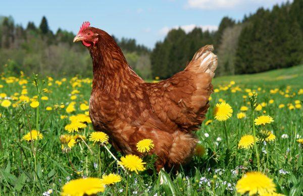Wir führen Futtermittel für Pferde, Hühner, Tauben, und diverse andere Tierarten von vielen namenhaften Futtermittelherstellern. Auch Einstreu, Heu und Stroh bieten wir Ihnen in unserem Sortiment.