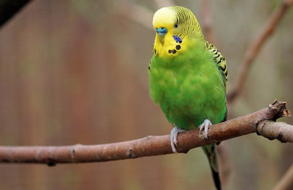 Wir beraten Sie über die artgerechte Haltung, das richtige Futter und die beste Pflege Ihres Vogels