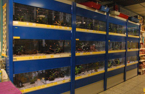 Unsere Aquaristik-Abteilung in Löningen